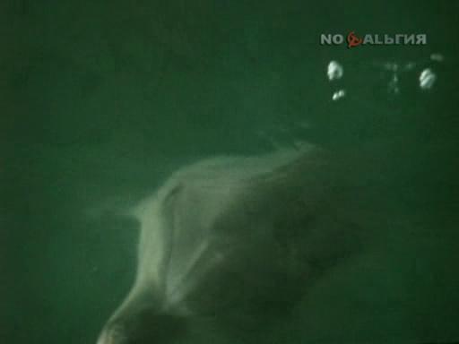 """люди и дельфины :)  """"ЛЮДИ И ДЕЛЬФИНЫ """""""